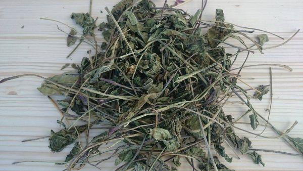 Sonnenhut Blätter (Echinacea)
